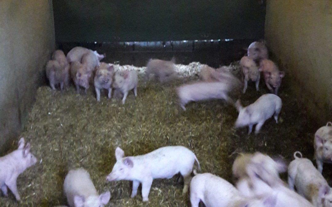 Sortie au Forum de l'élevage